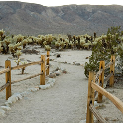 <p>The Cholla Cactus Garden is the perfect stop for families traveling to the park. // © 2016 iStock</p><p>Feature image (above): Joshua Tree National...