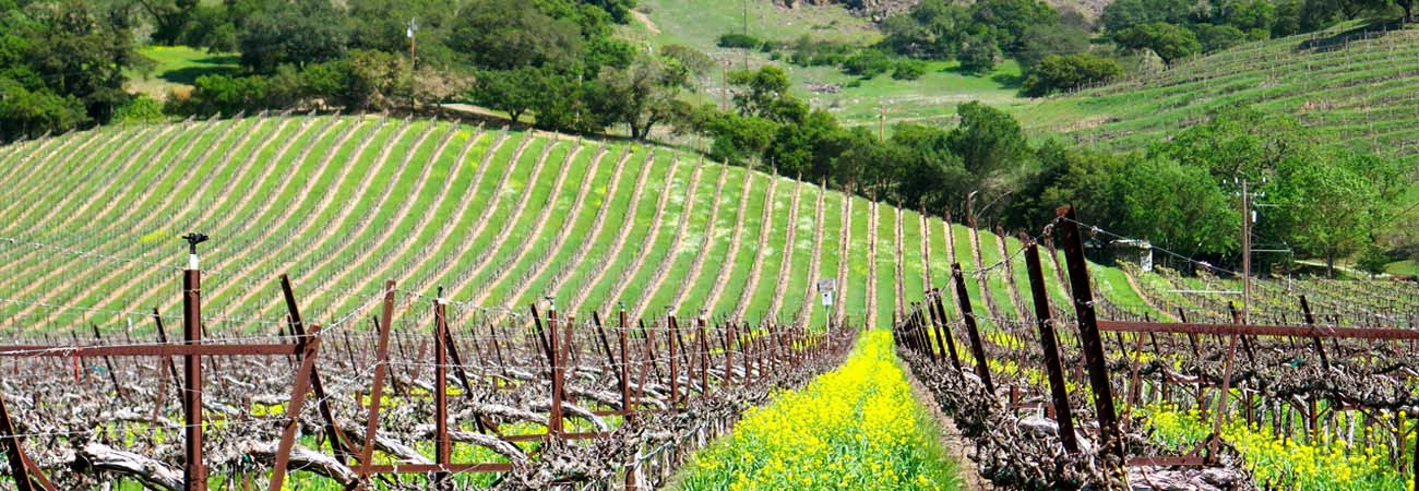 Family-Friendly Napa Valley Travel Guide