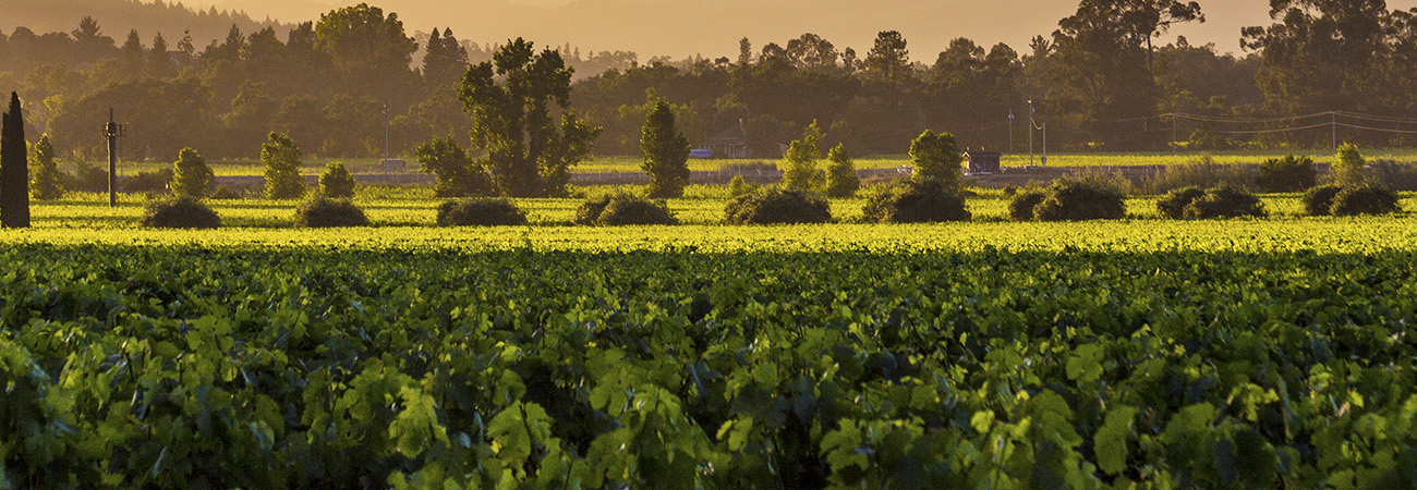 The Napa Valley Visitor Industry is Open for Business