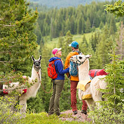 <p>Hang out with llamas on a half-day hike with Paragon Guides. // © 2016 Paragon Guides</p><p>Feature image (above): Fly over Vail via zipline with...