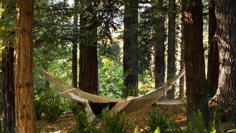 Enjoy ancient redwoods, live oaks and other forest fauna while at Ventana Big Sur.