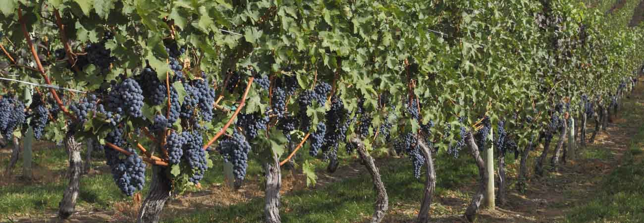 Okanagan Valley Wine Tours