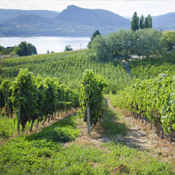 There are several unique ways to sample the wine of the Okanagan Valley in British Columbia. // © 2013 Thinkstock