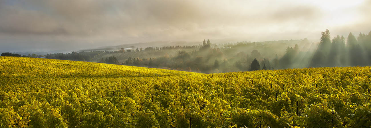 Guide: Willamette Valley Wineries, Hotels and More