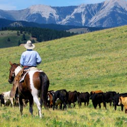 A cattle drive gives guests the opportunity to truly experience Alberta's nature. // © 2013 Sierra West Cabins & Ranch Vacations