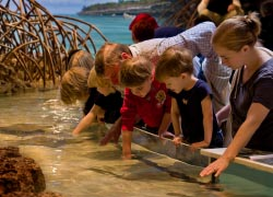 Kids can visit the Shark and Sting Ray touch tank at the aquarium. // © 2013 The New England Aquarium