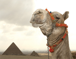 More travelers are choosing to travel to Egypt. // (c) David Dennis