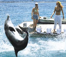 Visitors to EIlat have opportunities to view dolphins. // © 2011  Israel Ministry of Tourism