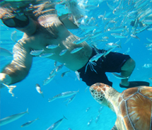 During an Island Routes Barbados tour, guests can swim with hawksbill turtles. // © 2011 Barbados Tourism Authority