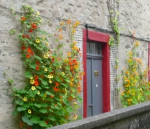 Bright flowers juxtaposed against the old stone walls of Orkney houses // © 2010 Susan B. Rheingold