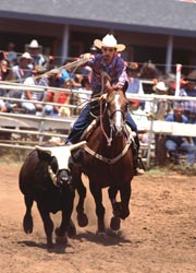 A cowboy ropes a steer during the Makawao Rodeo in Upcountry Maui.// (C) 2010 Ron Dahlquist/Maui Visitors Bureau