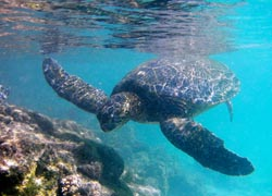 Sea turtles are just one of many species to be encountered.// (C) Steve Jurvetson
