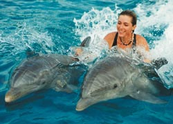 Clients can get up close and personal with dolphins at Oahu's Sea Life Park. // © 2010 Sea Life Park Hawaii