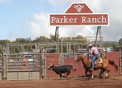 Parker Ranch, on the Big Island, is the setting for a popular annual rodeo. // © 2010 Parker Ranch