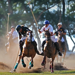 Visiting Oahu during polo season is one way to enjoy Hawaii spectator sports. // © 2013 Hawaii Polo Club
