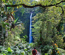 A visitor walks toward Akaka Falls on Hawaii Island. // © 2012 Hawaii Tourism Authority/Tor Johnson