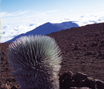 Haleakala National Park is home to the world's largest dormant volcano and endemic plants, such as the silversword. // © 2012