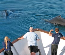 Clients onboard the Safari Explorer can go whale watching. // © 2010 American Safari Cruises