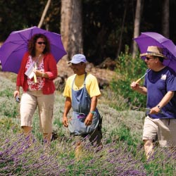 A walking tour of the Alii Kula Lavender Farm // © 2013 J. Anthony Martinez