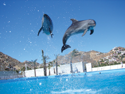 Swimmers can get up close to bottlenose dolphins at Cabo Dolphins. // (c) Los Cabos Convention & Visitors Bureau