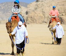 Clients can ride camels in Cabo with Cabo Adventures.// © 2011 Cabo adventures