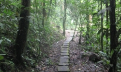 Clients can enjoy local flora and fauna during an easy trek to the Arenal Volcano // © Lisette Mejia 2009