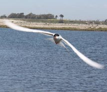 It's not uncommon to spot birds at the Bolsa Chica Wetlands. // © 2010 Deanna Ting