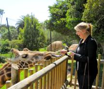 The writer feeds a giraffe at the Santa Barbara Zoo. // © 2011, Emily McManus