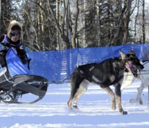 The Fur Rendezvous includes the Rondy World Championship Sled Dog Races. // © 2013 Anchorage Convention & Visitors Bureau