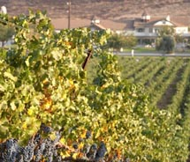 Temecula's wine country is a great low-key vacation spot for visitors. // (c) 2012 Temecula Valley Winegrowers Association
