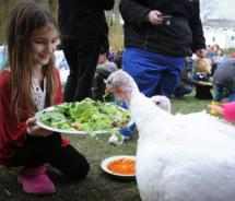 Farm Sanctuary serves up traditional Thanksgiving dishes prepared with vegan ingredients, during its annual Celebration for the Turkeys event. // (c)...