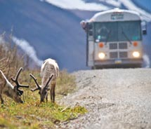 The Tundra Wilderness Tour is a top choice for wildlife viewing. // © 2011 bus: Kent Miller/NPS