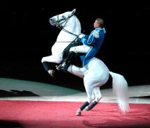 You could watch the famous white Lipizzaner stallions perform in which Vienna attraction? // © 2012 Shutterstock
