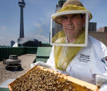 Honeybee apiary at the Fairmont Royal York // © 2011 Fairmont Hotels & Resorts