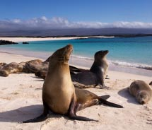 ALA adds Galapagos cruises. // © 2012 Thinkstock