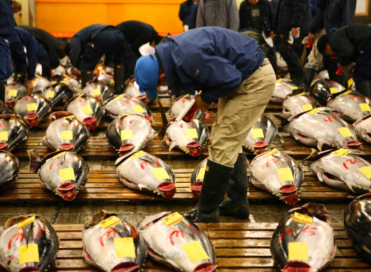 Tokyo's Tsukiji Market is the biggest wholesale fish and seafood market in the world. // © 2013 Thinkstock