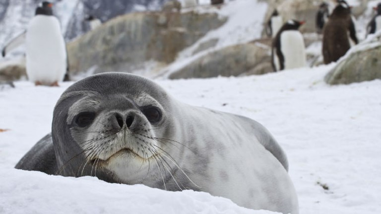 Spot seals on an Antarctica cruise expedition. // © 2015 Thinkstock