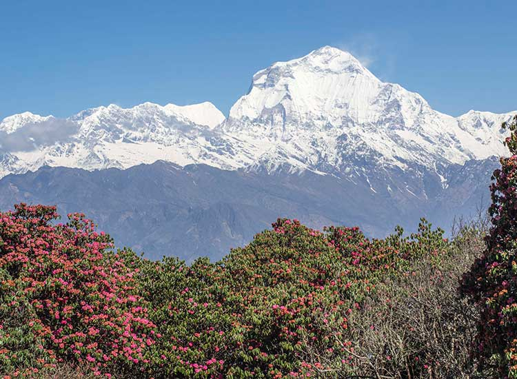 The third day is filled with views of the Annapurna and Dhaulagiri ranges, home to two of the world's highest mountains. // © 2015 Mindy Poder