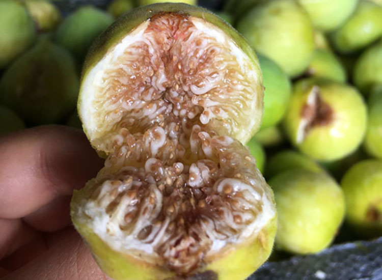 The flesh of this fig variety is bright red and tastes like honey. // © 2017 Giselle Abcarian