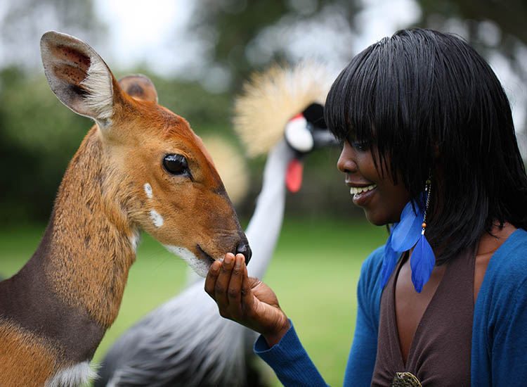 The on-site animal orphanage allows guests to get close to a variety of wildlife.  // © 2016 Fairmont Mount Kenya Safari Club