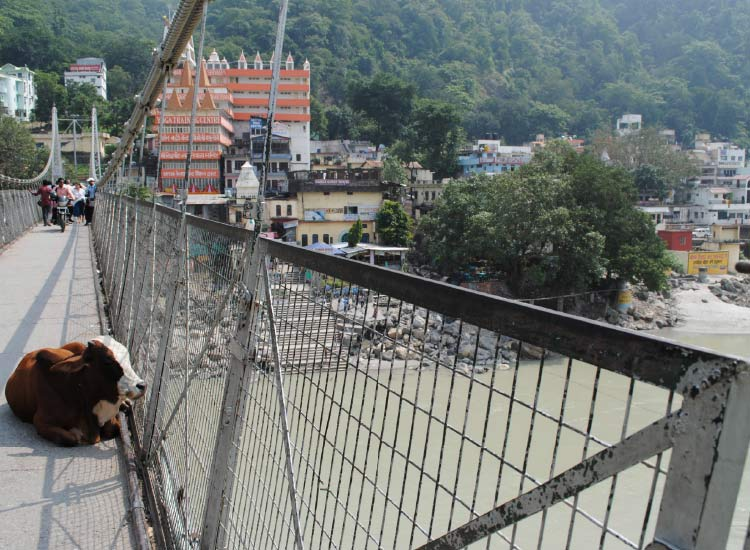 You never know what you might find on the two bridges that bisect Rishikesh. // © 2014 Mindy Poder