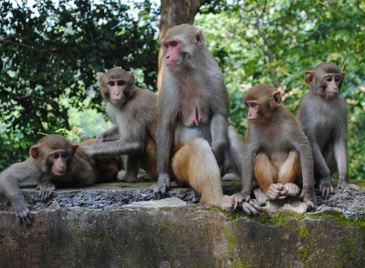When heading to the Beatles Ashram, watch out for monkeys. // © 2014 Mindy Poder