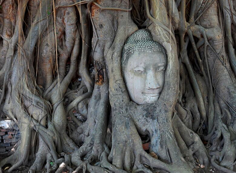 Wat Mahathat features a stone Buddha head surrounded by the tangled roots of a banyan tree. // © 2015 Shane Nelson