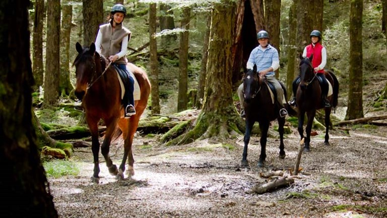 "Dart Stables' relaxed ""The Ride of the Rings"" tour passes actual filming locations in Paradise, such as the woods where the Lothlorien scenes were filmed for ""The Lord of the Rings."" // © 2014 Dart St"