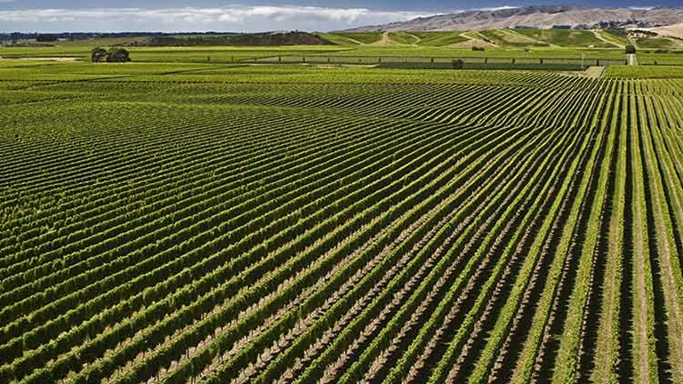 They then took a scenic cruise to the South Island, where they stayed at the Old Saint Mary's Convent Vineyard Retreat in the heart of Marlborough's wine growing area. // © 2014 Thinkstock/heikeinnz