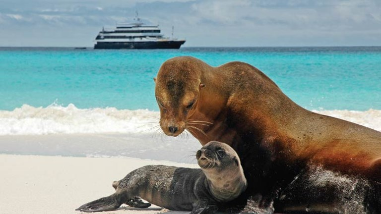 Wildlife in the Galapagos // © 2015 David Vargas /Lindblad Expeditions