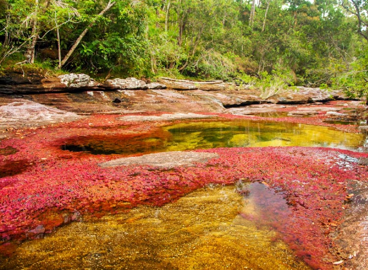The Cano Cristales river is an emerging hot spot. // © 2016 iStock