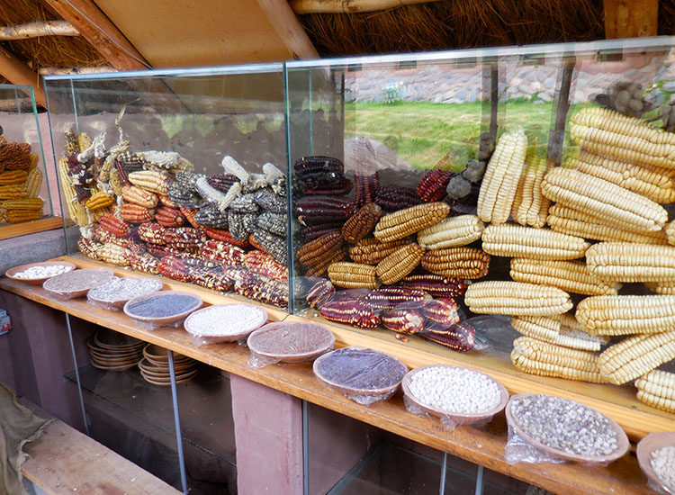 Peru grows 120 different varieties of corn, some of which are on display. // © 2014 Zorianna Kit