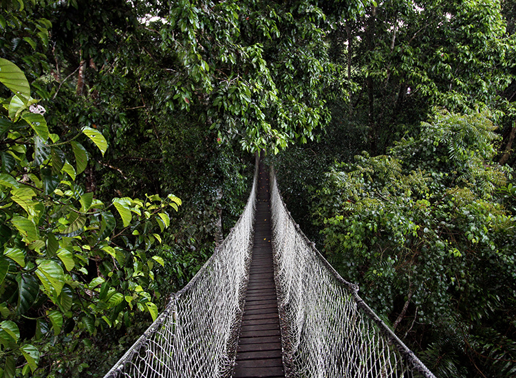 Inkaterra's canopy walk consists of a series of platforms and bridges suspended 30 meters above the forest floor. // © 2014 Megan Leader