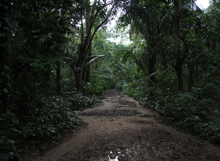 Guests can hike the trail to Lake Sandoval, one of Inkaterra's half-day tour options in the rain forest. // © 2014 Megan Leader